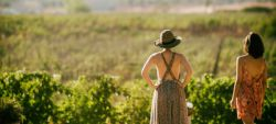 Photo for: Women Winemakers of USA