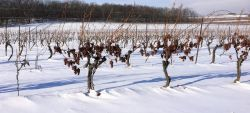 Photo for: All You Need To Know About Ice Wine and Its Unique Facts