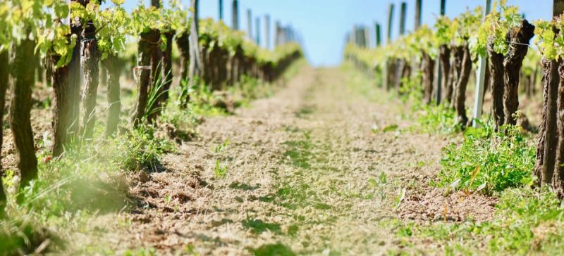 Photo for: Soil Types That Matter For Grape Growing