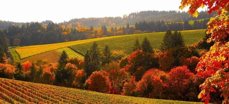 Photo for: America's Wine Regions: Oregon