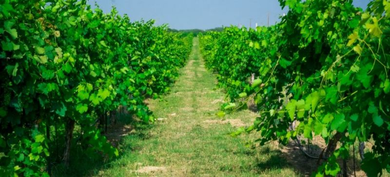 Photo for: America's Wine Regions: Texas High Plains