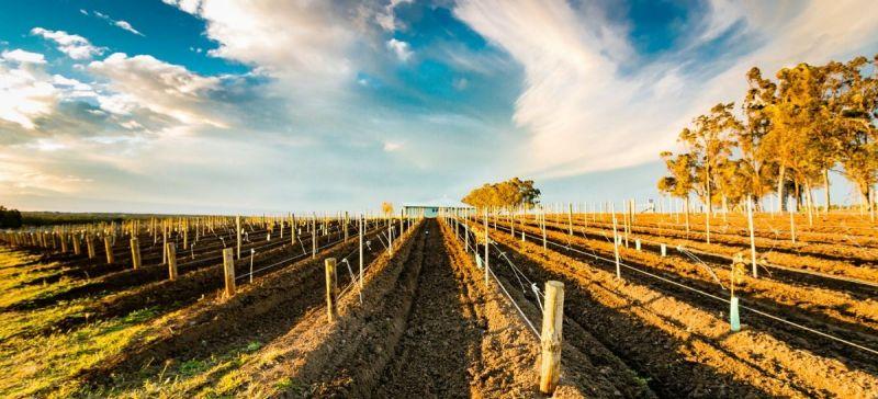 Photo for: Focus on: Australian Wine