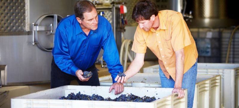 Photo for: Crafting Delicious Sonoma County Wines - Rodney Strong Wine Estates