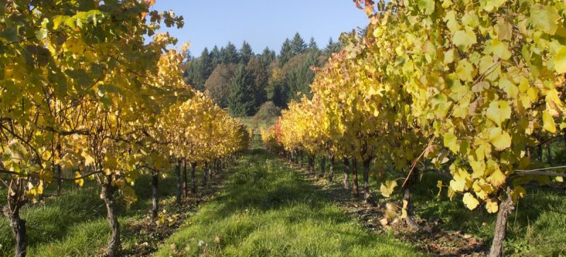 Photo for: Introducing Oregon Wine Regions